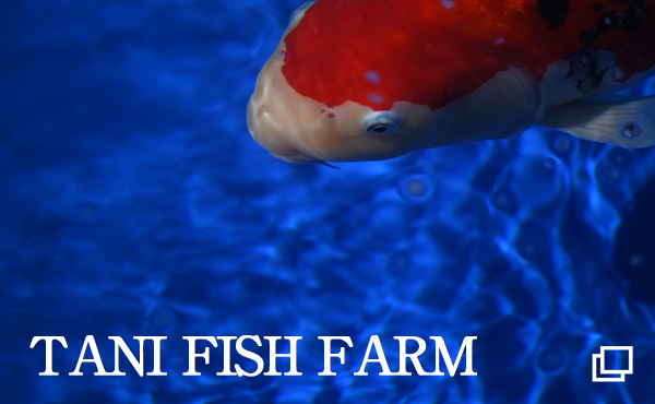 TANI FISH FARM